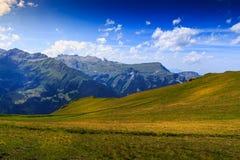 Prato nelle alpi di Bernese Fotografia Stock