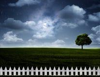 Prato notturno. Immagine Stock