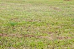Prato in pieno di erba verde Fotografia Stock