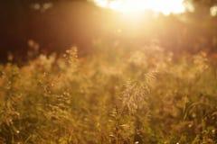 Prato pieno di sole di estate Immagine Stock Libera da Diritti