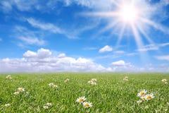 Prato pieno di sole sereno del campo in primavera Immagini Stock