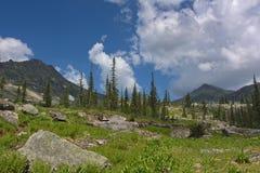 Prato pietroso della montagna di estate Fotografie Stock Libere da Diritti