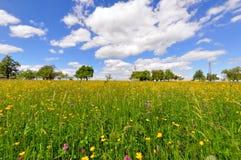 Prato in primavera Immagini Stock Libere da Diritti