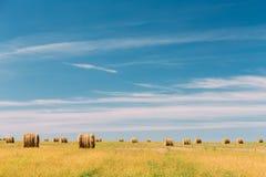 Prato rurale del campo del paesaggio con i molti Hay Bales After Harvest i Fotografia Stock Libera da Diritti