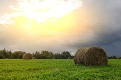 Prato rurale del campo del paesaggio con alba di Hay Bales After Harvest In Sunny Evening At Sunset Or nella fine dell'estate Sun fotografie stock