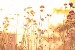 Prato soleggiato al tramonto Immagine Stock Libera da Diritti