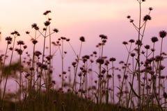 Prato soleggiato al tramonto Immagini Stock