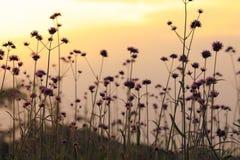 Prato soleggiato al tramonto Immagini Stock Libere da Diritti