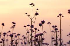 Prato soleggiato al tramonto Fotografia Stock Libera da Diritti
