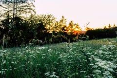 Prato soleggiato verde - tramonto del paesaggio - energia di Eco immagini stock libere da diritti