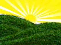Prato sotto il sole luminoso Fotografia Stock Libera da Diritti
