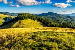 Prato su un pendio di collina vicino alla foresta Fotografia Stock