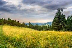 Prato su un pendio di collina vicino alla foresta ad alba Fotografie Stock Libere da Diritti