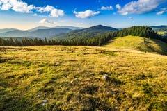 Prato su un pendio di collina vicino alla foresta ad alba Immagine Stock