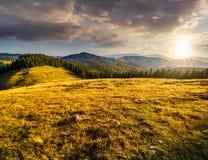 Prato su un pendio di collina vicino alla foresta al tramonto Fotografia Stock