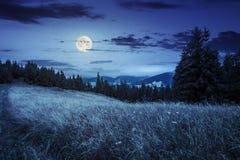 Prato su un pendio di collina vicino alla foresta alla notte Fotografia Stock Libera da Diritti