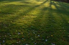 Prato in un parco della città con le ombre sulla copertura di erba Immagini Stock