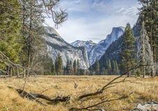 Prato in valle di Yosemite con la mezza cupola nel fondo Fotografie Stock Libere da Diritti