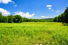 Prato verde Immagine Stock