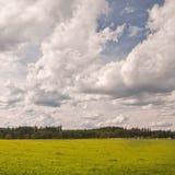 Prato verde Immagine Stock Libera da Diritti