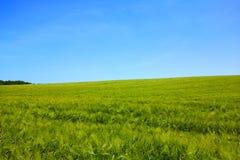 Prato verde Immagini Stock