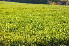 Prato verde Immagini Stock Libere da Diritti