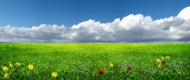 Prato verde Fotografia Stock Libera da Diritti