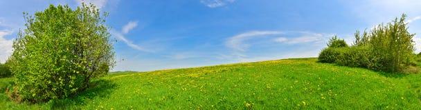 Prato verde Fotografia Stock