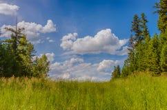 Prato verde calmo fotografie stock libere da diritti