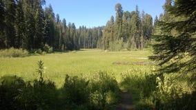 Prato verde circondato dagli alberi Immagine Stock