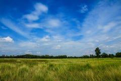 Prato verde con cielo blu immagini stock libere da diritti
