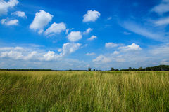 Prato verde con cielo blu immagini stock