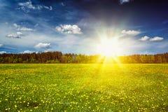 Prato verde con erba di estate Fotografia Stock