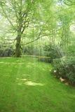 Prato verde con gli alberi su priorità bassa Fotografia Stock Libera da Diritti