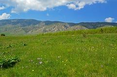 Prato verde con i fiori Immagine Stock