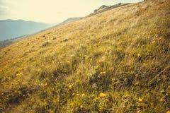 Prato verde con i fiori del campo Paesaggio della natura con l'alta erba di atteggiamento Bello paesaggio in montagne carpatiche Fotografia Stock Libera da Diritti