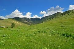 Prato verde con i fiori del papavero Fotografia Stock Libera da Diritti