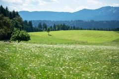 Prato verde con i fiori fotografie stock libere da diritti