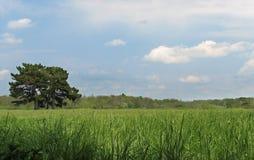 prato verde con l'albero Fotografia Stock Libera da Diritti