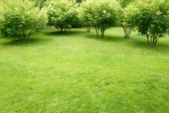 Prato verde con l'albero Immagine Stock Libera da Diritti