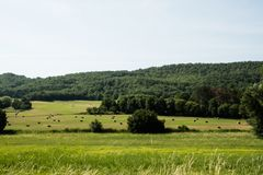 Prato verde con le balle e gli alberi di fieno in Provenza, Francia Fotografia Stock