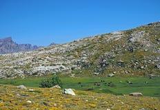 Prato verde della montagna con il pascolo dei cavalli su roccia e su cielo blu immagine stock libera da diritti