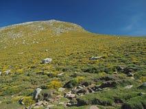 Prato verde della montagna con le rocce immagine stock libera da diritti