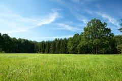 Prato verde di estate con parecchi alberi nel fondo Fotografie Stock
