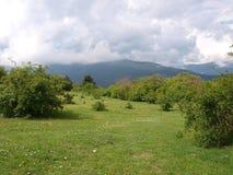 Prato verde III Fotografia Stock Libera da Diritti