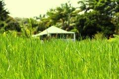 Prato verde, Maui Fotografie Stock Libere da Diritti