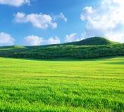 Prato verde in montagna Fotografia Stock