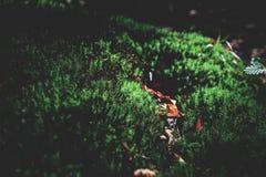 Prato verde muscoso nella foresta di autunno con luce solare fotografia stock