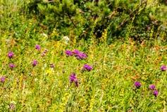 Prato verde nella foresta fotografie stock libere da diritti