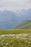 Prato verde Paesaggio di Altai della montagna Fotografie Stock